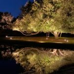 outdoor landscape lighting illuminates a tree next to a pond at night