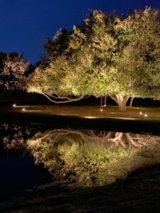 Romantic outdoor lighting illuminates this large green tree and reflects its image in a lake