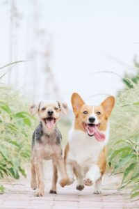 Two dogs walking together surrounded by greenery